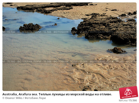 Купить «Australia, Arafura sea. Теплые лужицы из морской воды на отливе.», фото № 15566, снято 8 октября 2006 г. (c) Eleanor Wilks / Фотобанк Лори