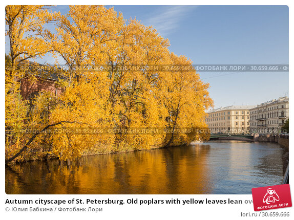 Купить «Autumn cityscape of St. Petersburg. Old poplars with yellow leaves lean over the water of the river Moika on a sunny autumn day», фото № 30659666, снято 16 октября 2018 г. (c) Юлия Бабкина / Фотобанк Лори