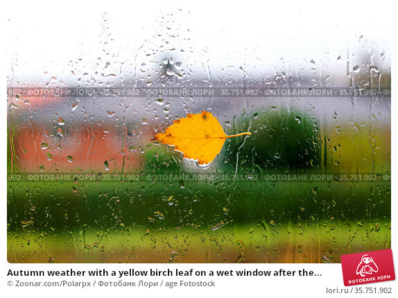 Autumn weather with a yellow birch leaf on a wet window after the... Стоковое фото, фотограф Zoonar.com/Polarpx / age Fotostock / Фотобанк Лори