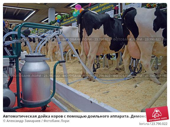 Оборудованию по дойки коров