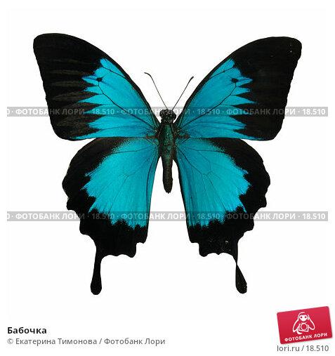 Бабочка, фото № 18510, снято 24 марта 2017 г. (c) Екатерина Тимонова / Фотобанк Лори