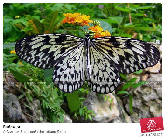 Бабочка, фото № 28622, снято 3 сентября 2006 г. (c) Михаил Баевский / Фотобанк Лори