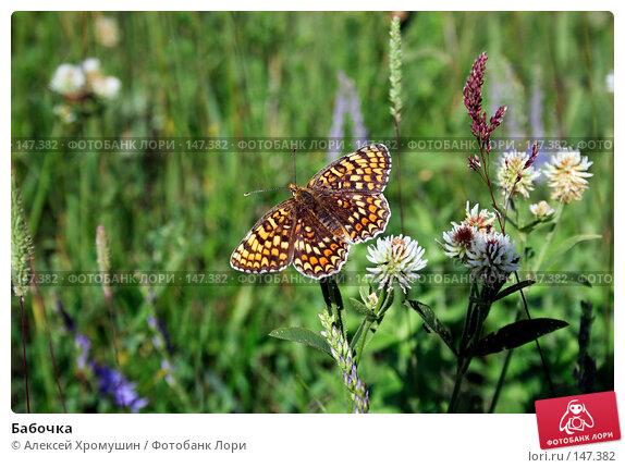 Купить «Бабочка», фото № 147382, снято 12 июня 2007 г. (c) Алексей Хромушин / Фотобанк Лори