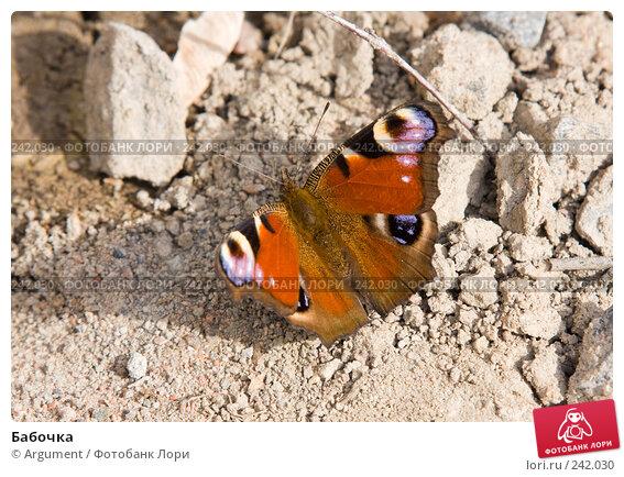 Бабочка, фото № 242030, снято 2 апреля 2008 г. (c) Argument / Фотобанк Лори