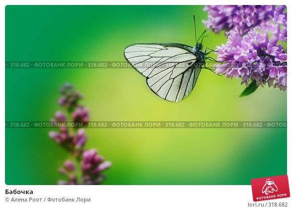 Бабочка, фото № 318682, снято 18 июня 2006 г. (c) Алена Роот / Фотобанк Лори