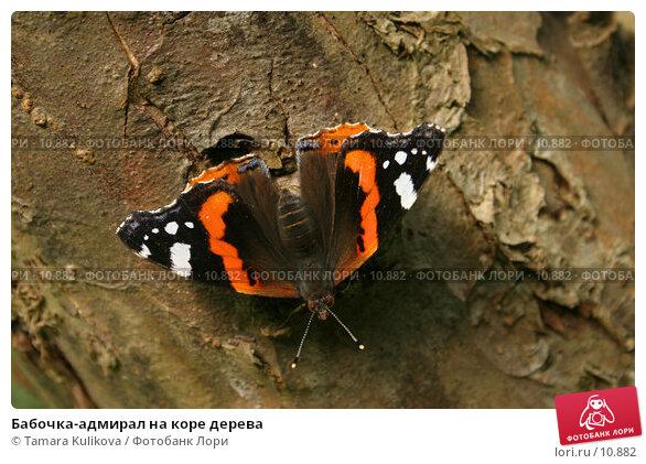 Бабочка-адмирал на коре дерева, фото № 10882, снято 8 октября 2006 г. (c) Tamara Kulikova / Фотобанк Лори