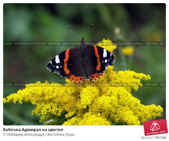 Бабочка Адмирал на цветке, фото № 190046, снято 25 августа 2006 г. (c) Лебедева Александра / Фотобанк Лори