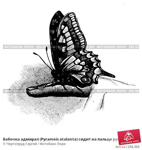 Бабочка адмирал (Pyrameis atalanta) сидит на пальце руки. Штриховой рисунок из старой книги., фото № 294354, снято 22 июля 2017 г. (c) Чертопруд Сергей / Фотобанк Лори