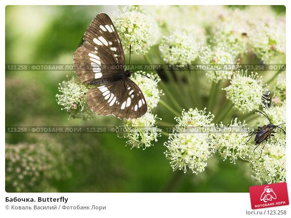 Бабочка. Butterfly, фото № 123258, снято 28 октября 2016 г. (c) Коваль Василий / Фотобанк Лори