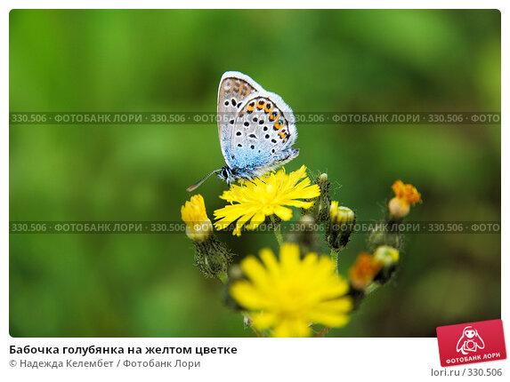 Бабочка голубянка на желтом цветке, фото № 330506, снято 13 июня 2008 г. (c) Надежда Келембет / Фотобанк Лори