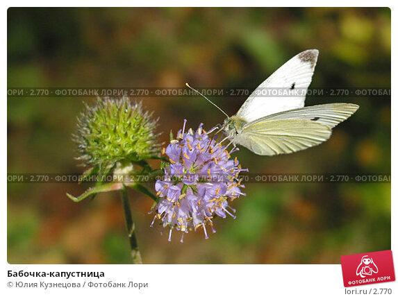 Бабочка-капустница, фото № 2770, снято 12 сентября 2004 г. (c) Юлия Кузнецова / Фотобанк Лори
