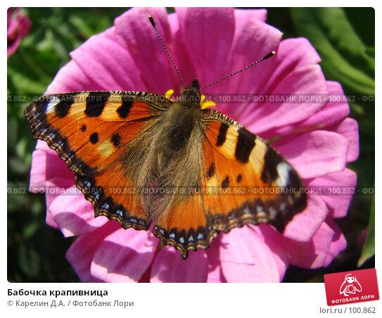 Бабочка крапивница, фото № 100862, снято 1 сентября 2007 г. (c) Карелин Д.А. / Фотобанк Лори