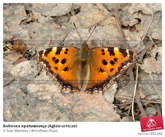 Бабочка крапивница (Aglais urticae), фото № 252202, снято 14 апреля 2008 г. (c) Василий Каргандюм / Фотобанк Лори