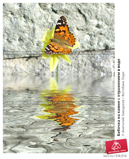 Бабочка на камне с отражением в воде, фото № 318514, снято 31 августа 2004 г. (c) Анатолий Заводсков / Фотобанк Лори