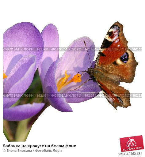 Купить «Бабочка на крокусе на белом фоне», фото № 162634, снято 21 марта 2018 г. (c) Елена Блохина / Фотобанк Лори