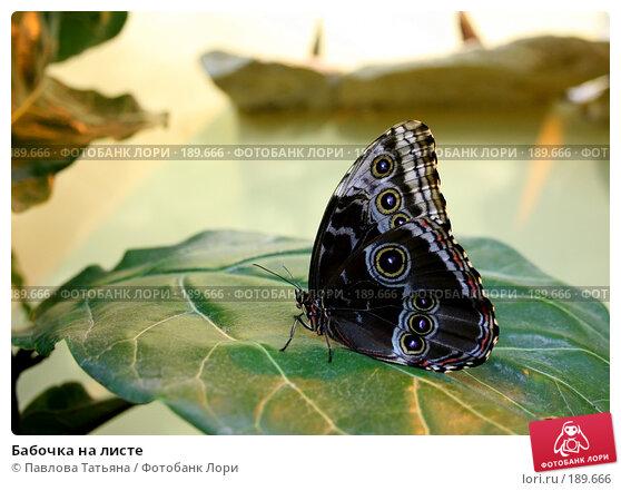 Бабочка на листе, фото № 189666, снято 18 декабря 2007 г. (c) Павлова Татьяна / Фотобанк Лори