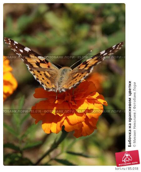 Бабочка на оранжевом  цветке, фото № 85018, снято 7 сентября 2007 г. (c) Михаил Николаев / Фотобанк Лори