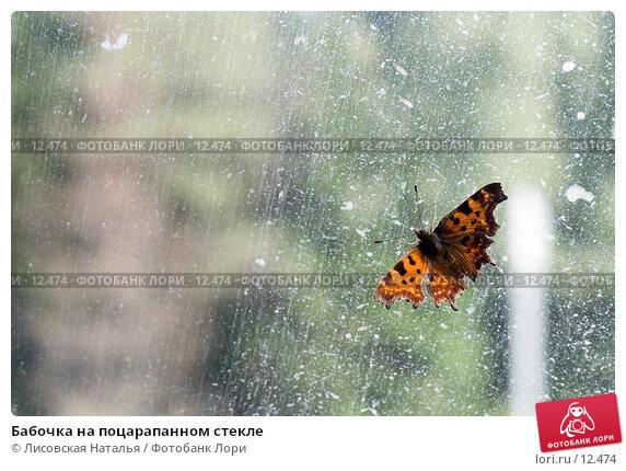 Бабочка на поцарапанном стекле, фото № 12474, снято 8 сентября 2006 г. (c) Лисовская Наталья / Фотобанк Лори