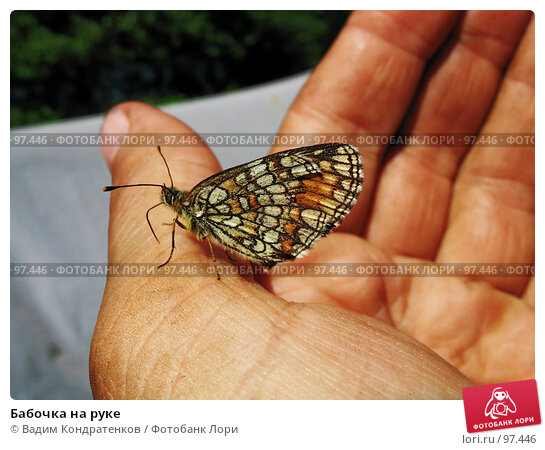 Бабочка на руке, фото № 97446, снято 22 июля 2017 г. (c) Вадим Кондратенков / Фотобанк Лори