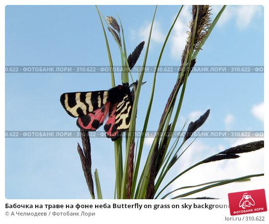 Бабочка на траве на фоне неба Butterfly on grass on sky background, фото № 310622, снято 3 мая 2006 г. (c) A Челмодеев / Фотобанк Лори