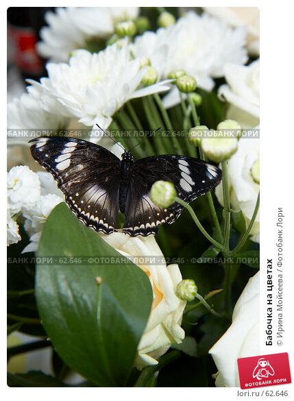Бабочка на цветах, эксклюзивное фото № 62646, снято 14 июля 2007 г. (c) Ирина Мойсеева / Фотобанк Лори