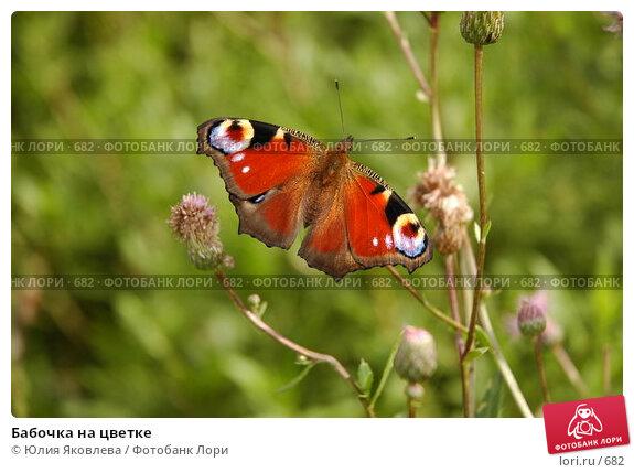 Бабочка на цветке, фото № 682, снято 2 августа 2005 г. (c) Юлия Яковлева / Фотобанк Лори