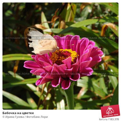 Бабочка на цветке, фото № 183378, снято 29 августа 2007 г. (c) Ирина Гусева / Фотобанк Лори