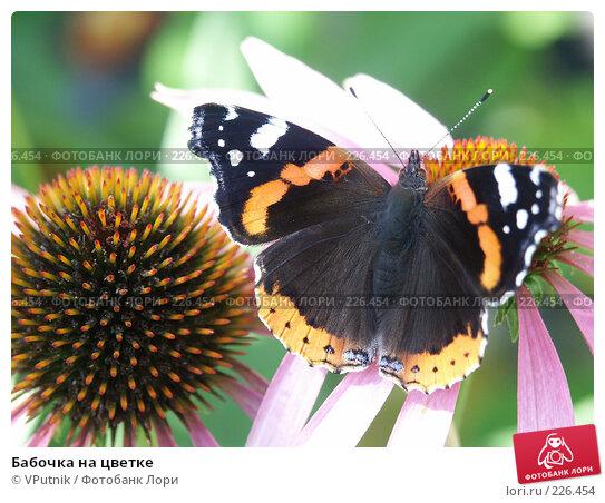 Бабочка на цветке, фото № 226454, снято 29 августа 2006 г. (c) VPutnik / Фотобанк Лори