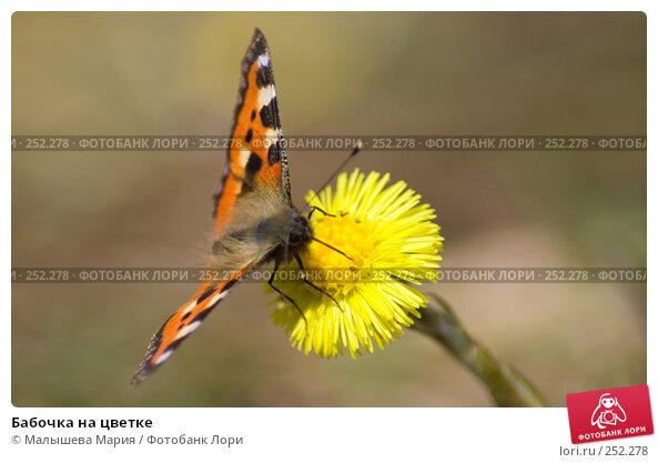 Купить «Бабочка на цветке», фото № 252278, снято 12 апреля 2008 г. (c) Малышева Мария / Фотобанк Лори