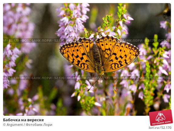 Бабочка на вереске, фото № 52170, снято 27 июля 2005 г. (c) Argument / Фотобанк Лори
