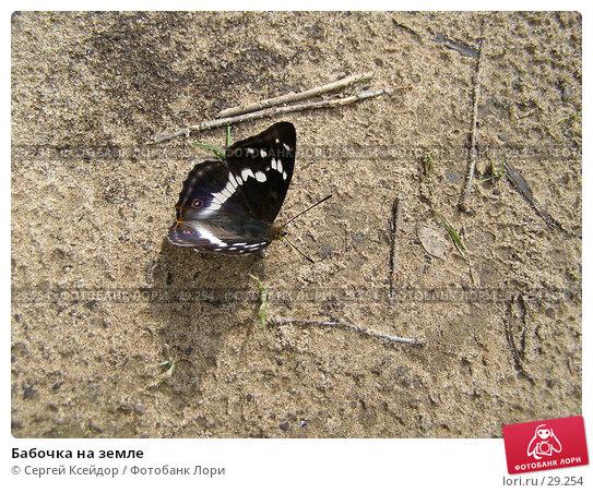 Бабочка на земле, фото № 29254, снято 27 июня 2006 г. (c) Сергей Ксейдор / Фотобанк Лори