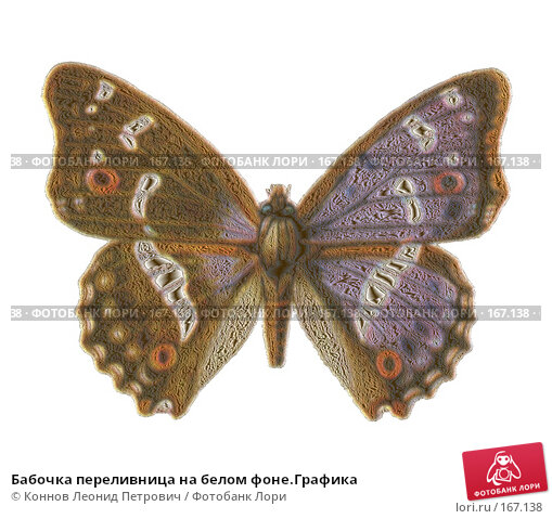 Бабочка переливница на белом фоне.Графика, иллюстрация № 167138 (c) Коннов Леонид Петрович / Фотобанк Лори