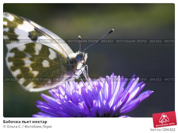 Бабочка пьет нектар, фото № 204822, снято 24 октября 2016 г. (c) Ольга С. / Фотобанк Лори