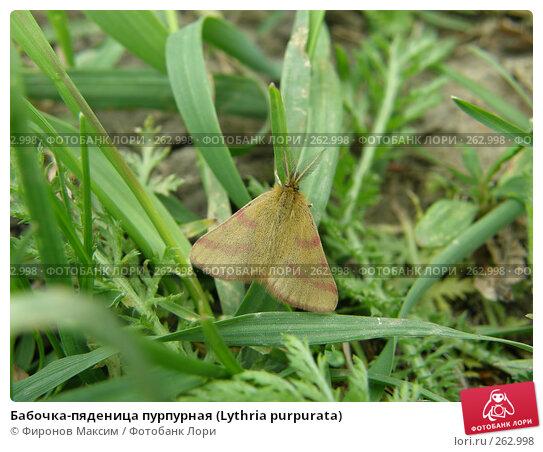 Бабочка-пяденица пурпурная (Lythria purpurata), фото № 262998, снято 26 апреля 2008 г. (c) Фиронов Максим / Фотобанк Лори