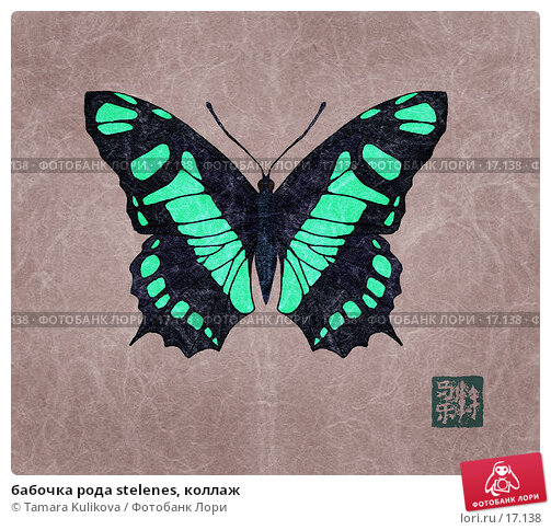 Купить «бабочка рода stelenes, коллаж», иллюстрация № 17138 (c) Tamara Kulikova / Фотобанк Лори