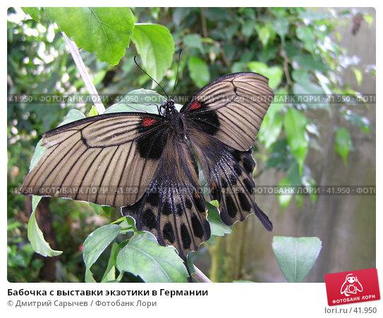 Бабочка с выставки экзотики в Германии, фото № 41950, снято 14 апреля 2006 г. (c) Дмитрий Сарычев / Фотобанк Лори