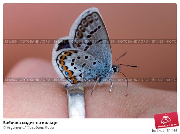 Бабочка сидит на кольце, фото № 151466, снято 8 июля 2006 г. (c) Argument / Фотобанк Лори