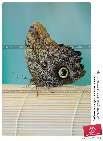 Купить «Бабочка сидит на плетёнке», фото № 201218, снято 13 февраля 2008 г. (c) Алексей Судариков / Фотобанк Лори