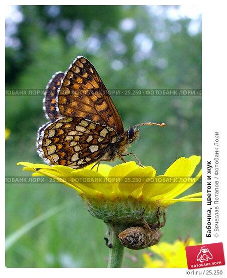Купить «Бабочка, цветок и жук», фото № 25250, снято 10 июля 2004 г. (c) Вячеслав Потапов / Фотобанк Лори