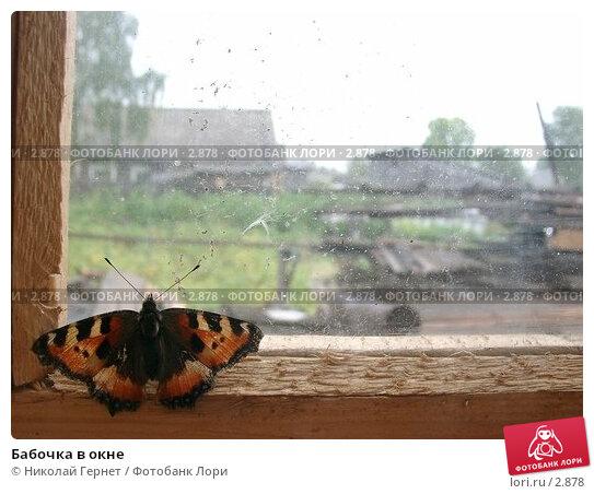 Бабочка в окне, фото № 2878, снято 21 августа 2003 г. (c) Николай Гернет / Фотобанк Лори