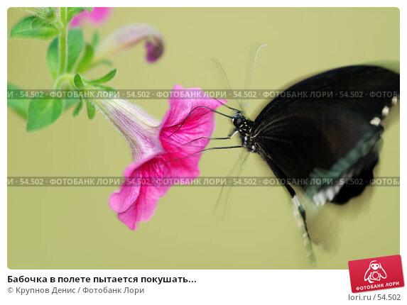 Бабочка в полете пытается покушать..., фото № 54502, снято 15 мая 2007 г. (c) Крупнов Денис / Фотобанк Лори
