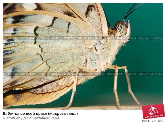 Бабочка во всей красе (макросъемка), фото № 50642, снято 7 мая 2007 г. (c) Крупнов Денис / Фотобанк Лори