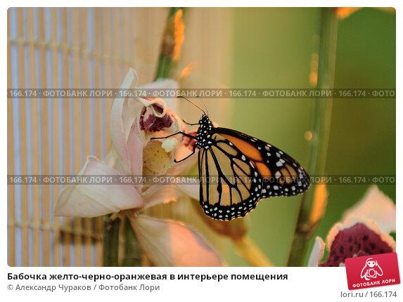 Бабочка желто-черно-оранжевая в интерьере помещения, фото № 166174, снято 2 января 2008 г. (c) Александр Чураков / Фотобанк Лори