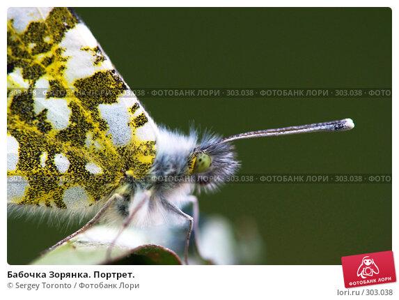 Бабочка Зорянка. Портрет., фото № 303038, снято 18 мая 2008 г. (c) Sergey Toronto / Фотобанк Лори