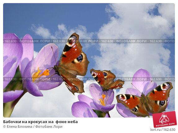 Бабочки на крокусах на  фоне неба, фото № 162630, снято 26 июня 2007 г. (c) Елена Блохина / Фотобанк Лори