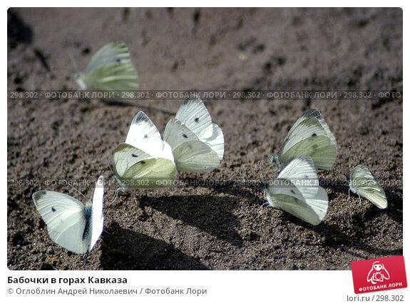 Бабочки в горах Кавказа, фото № 298302, снято 27 августа 2004 г. (c) Оглоблин Андрей Николаевич / Фотобанк Лори