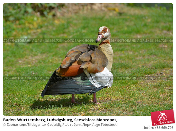 Baden-Württemberg, Ludwigsburg, Seeschloss Monrepos, Стоковое фото, фотограф Zoonar.com/Bildagentur Geduldig / age Fotostock / Фотобанк Лори