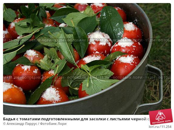 Бадья с томатами подготовленными для засолки с листьями черной смородины и вишни, фото № 11254, снято 27 августа 2006 г. (c) Александр Паррус / Фотобанк Лори
