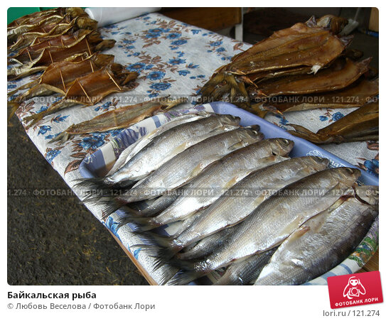 Купить «Байкальская рыба», фото № 121274, снято 4 октября 2007 г. (c) Любовь Веселова / Фотобанк Лори