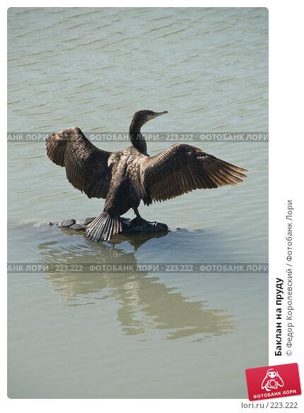 Купить «Баклан на пруду», фото № 223222, снято 12 марта 2008 г. (c) Федор Королевский / Фотобанк Лори